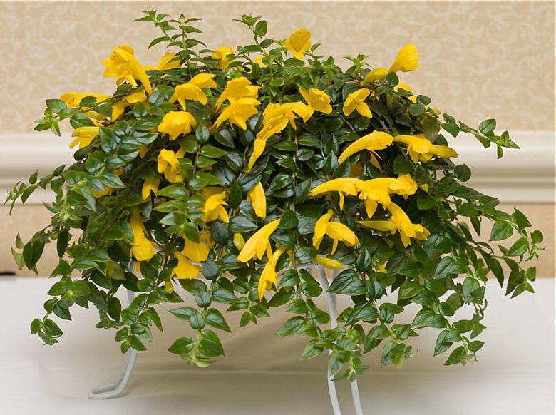 xeralia españa venta suculentas venta online de plantas