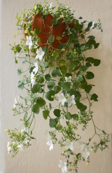 Rośliny Doniczkowe Kwiaty Doniczkowe