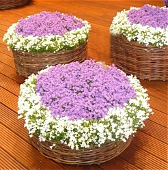 Kwiaty Doniczkowe Kwiaty Doniczkowe