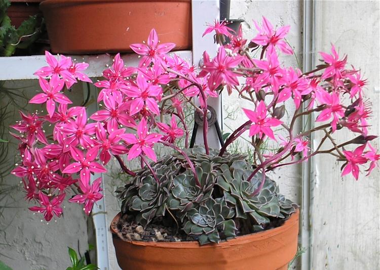 Zojalitwin Kwiaty Doniczkowe